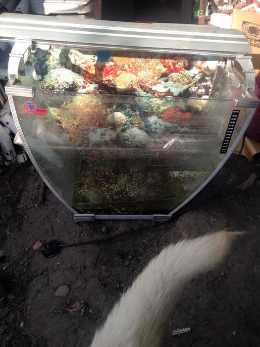 Unusual fish tank for sale darlaston wolverhampton for Unique fish tanks for sale
