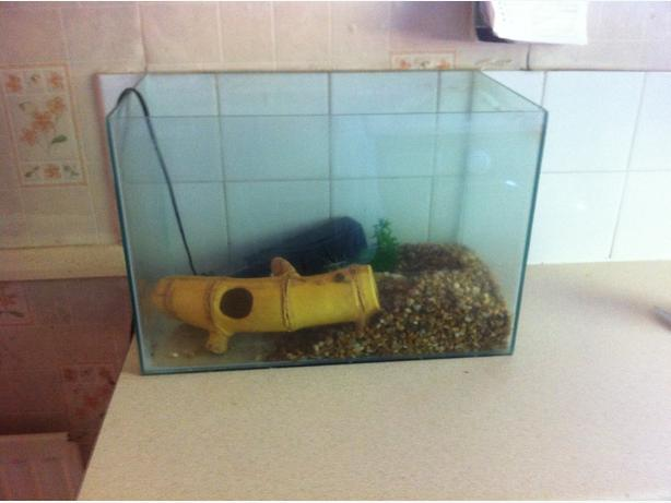Fish tank inc gravel working filter dudley dudley for Fish tank filter not working