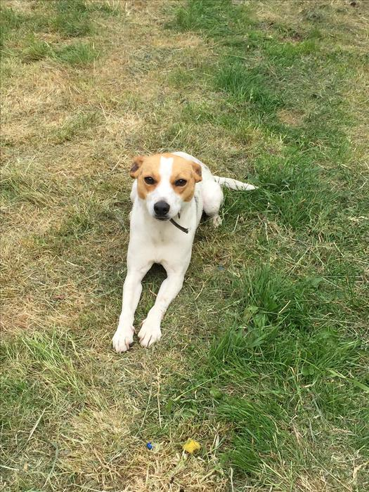 Rehome Dog To Good Home