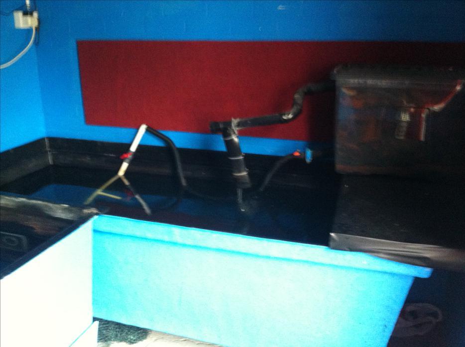 Koi carp fiberglass q teen rearing tank 1600 litres for Koi tank size