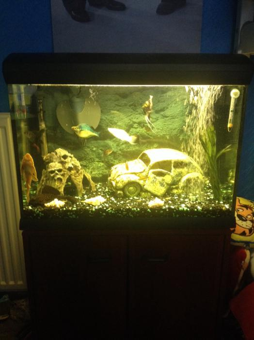 Full tropical fish tank set up halesowen dudley for Setting up a fish tank