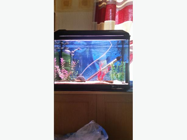 fish tank thermometer how to read