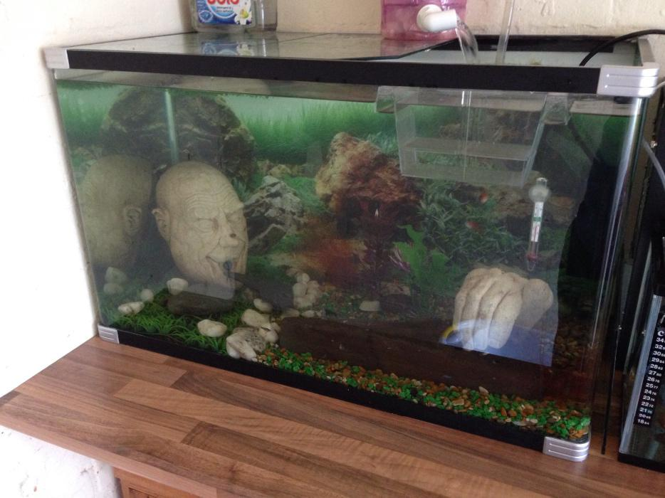 Fish tank bloxwich walsall mobile for Used fish tank