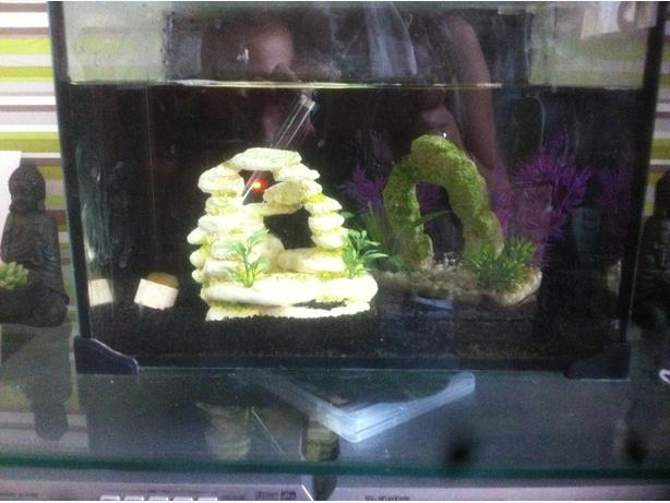 how to set up a fish tank for tropical fish