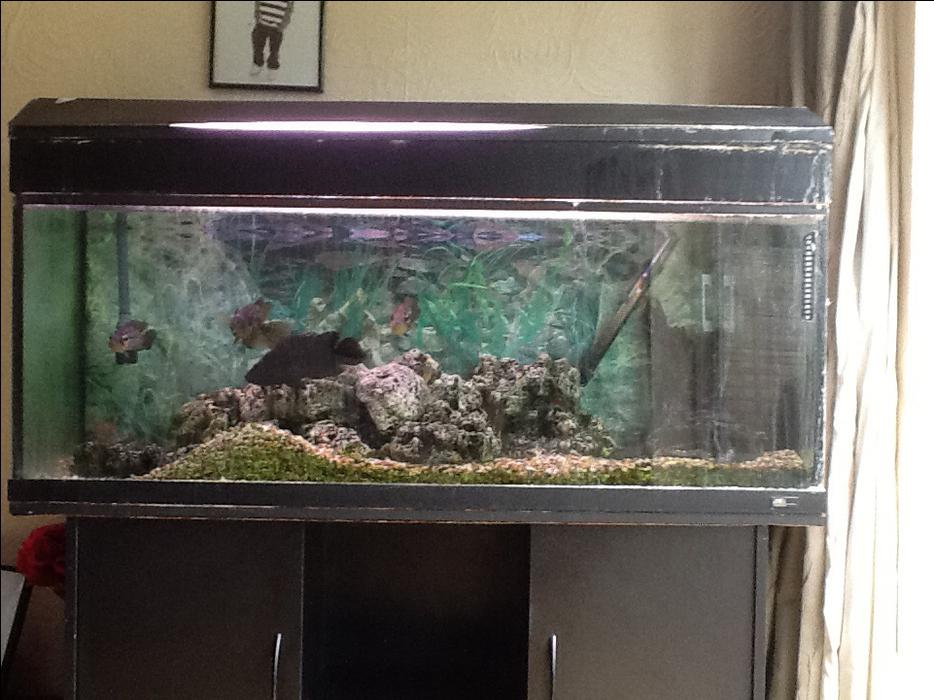 4ft aquarium with fish for sale walsall wolverhampton for Amazon fish tanks for sale
