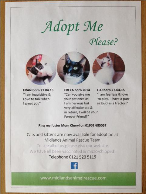 Rescue Cats Sandwell