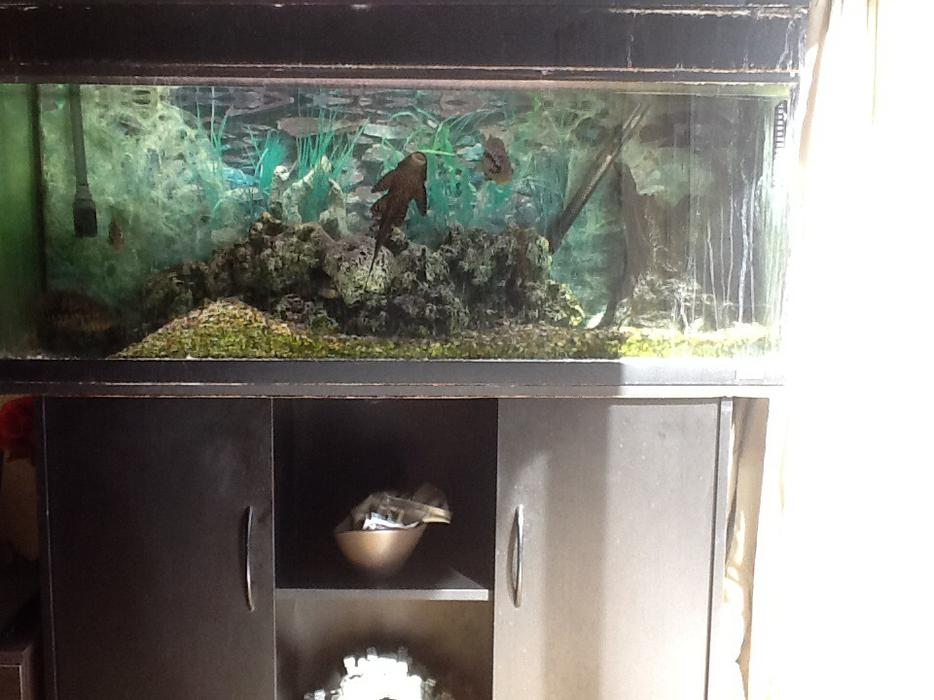 4ft juwel aquarium with fish for sale walsall walsall for Amazon fish tanks for sale