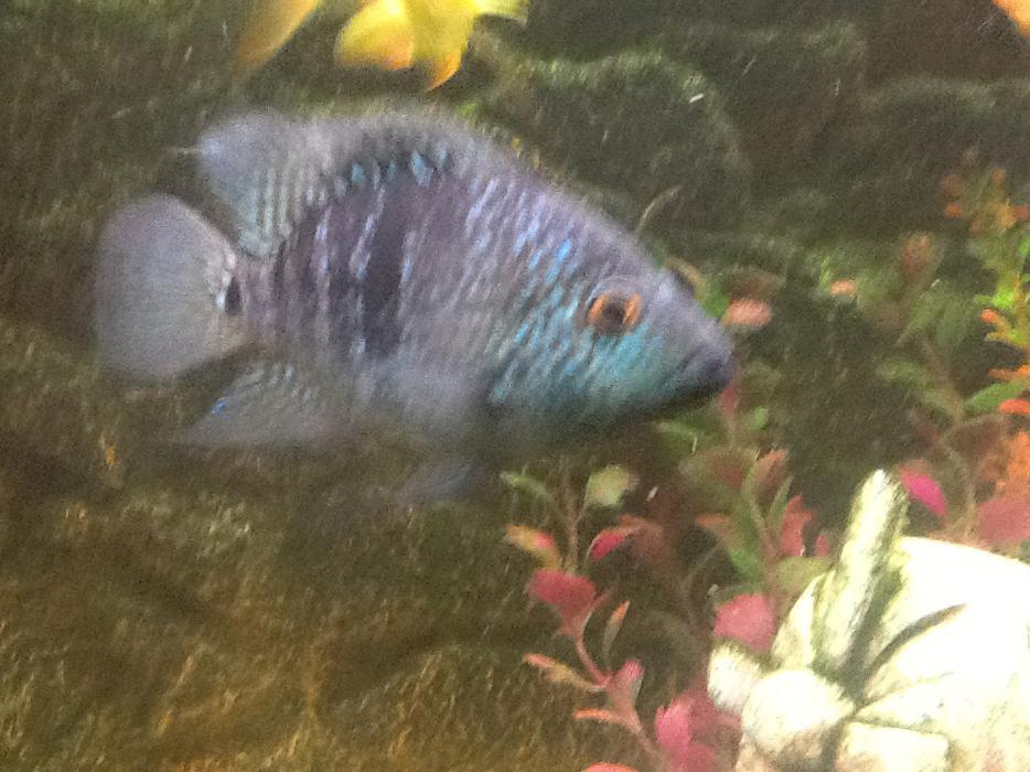 Tropical fish for sale wolverhampton dudley for Pet fish for sale