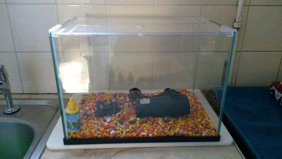 Fish tank accessories for sale rowley regis sandwell for Used fish tanks for sale