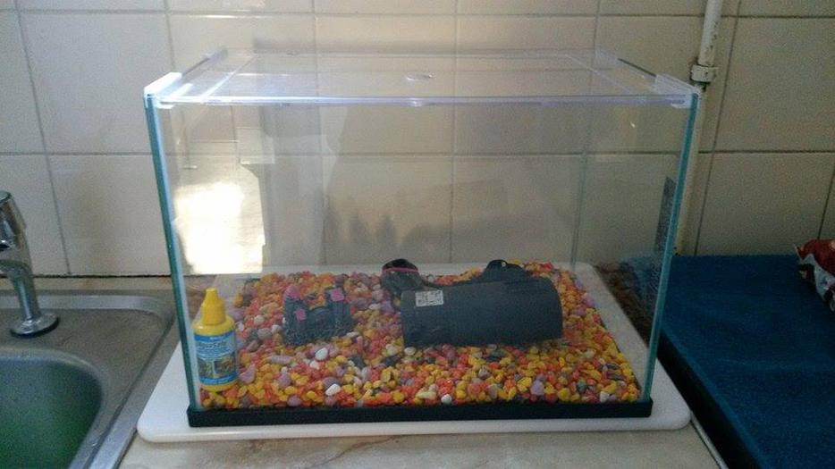 Fish Tank Accessories For Sale Rowley Regis Sandwell