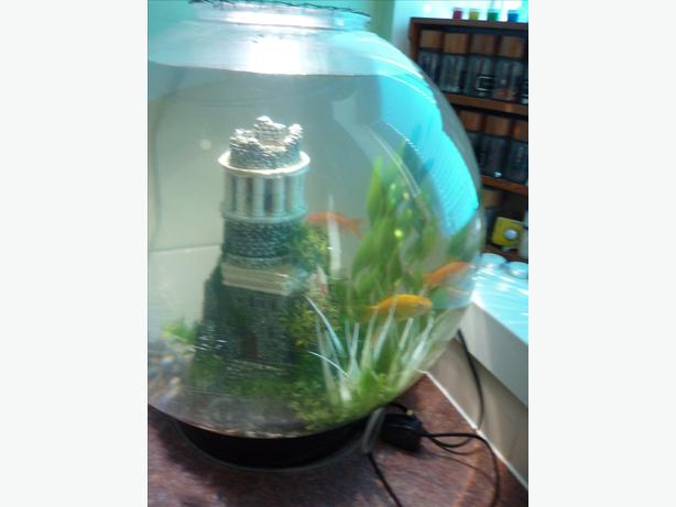 Large Fish Bowl And Fish For Sale Bloxwich Sandwell