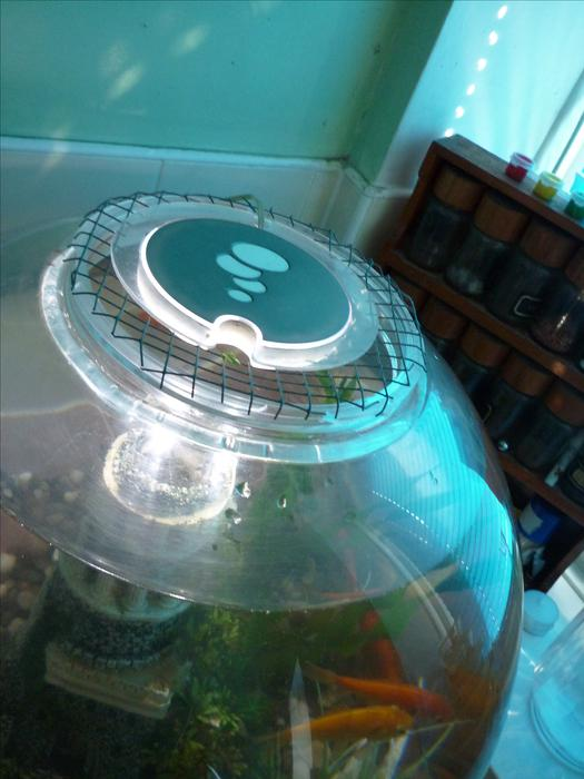 Large fish bowl and fish for sale bloxwich sandwell for Large fish bowl