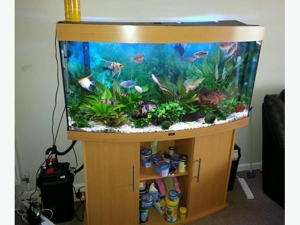 juwel vision 180 bow front fish tank full setup with cabinet wolverhampton dudley. Black Bedroom Furniture Sets. Home Design Ideas