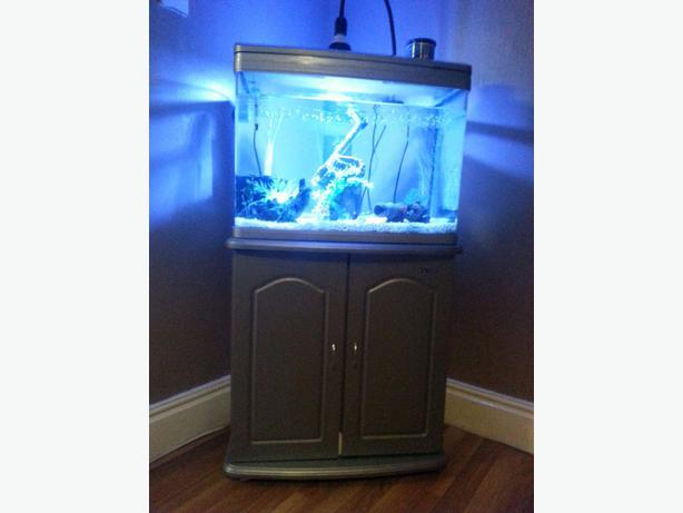 100l tropical fish aquarium halesowen wolverhampton for What do you need for a fish tank