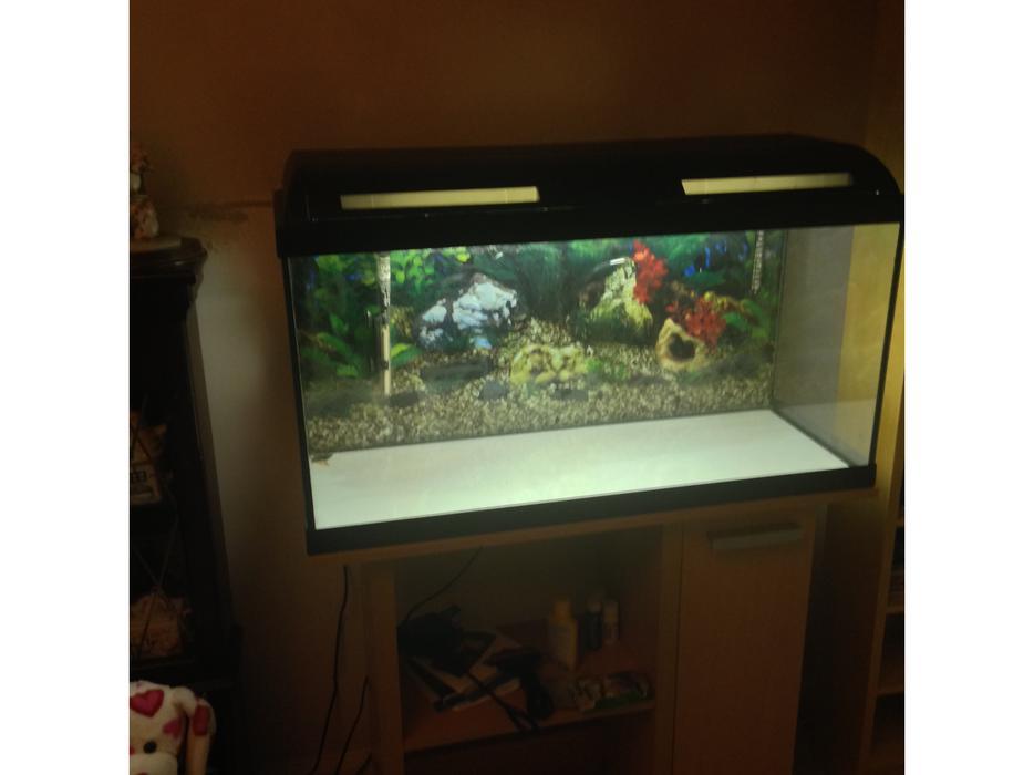 Aquarium fish tank no fish brierley hill walsall for Used fish tank