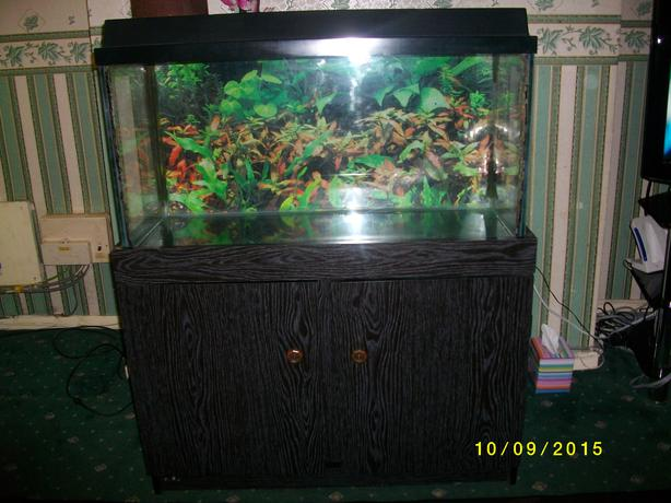 Fish tank with hood and light including cabinet dudley for Fish tank light hood