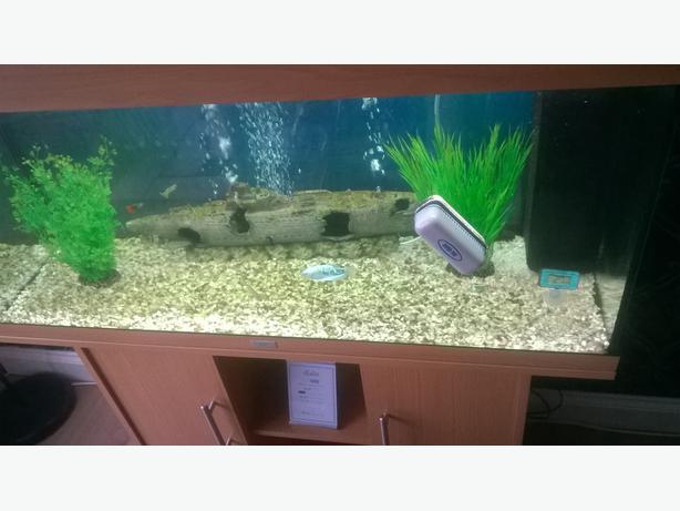 Juwel 180 tropical aquarium west bromwich wolverhampton for Fish tank rock cleaner