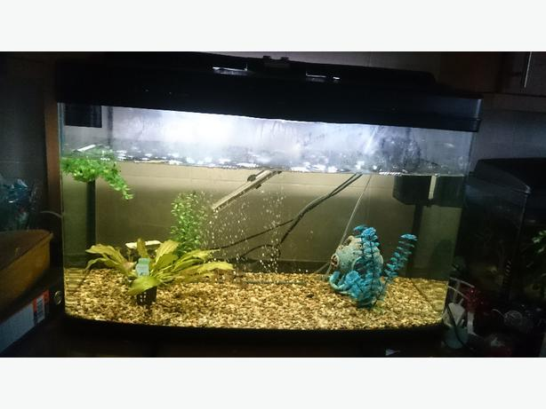 Fish tank sedgley sandwell for Fish tank with built in filter