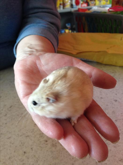 Uk Commercial Dwarf Hamster Food
