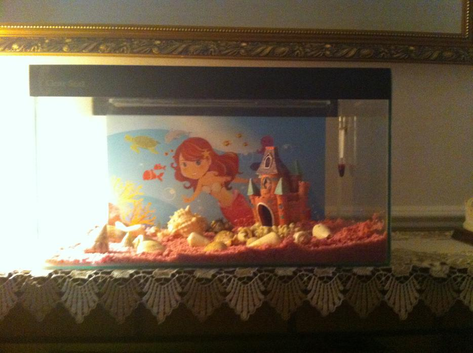 Beautiful Fish Tank Great Barr Dudley