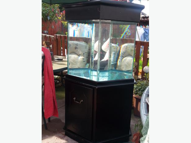 Hexagon fish tank and stand tipton wolverhampton for Hexagon fish tank with stand