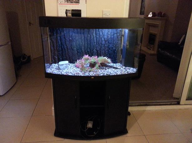 Juwel vision 180 3ft bow front fish tank full setup with for Bow front fish tank