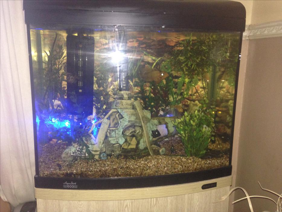 Aqua one bow fronted fish tank brierley hill wolverhampton for Bow fish tank