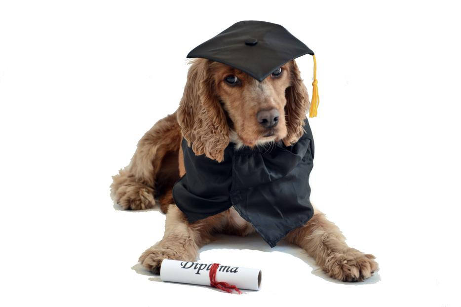 Image Result For Dog Training Classes Sheffield