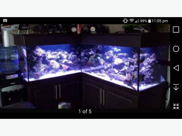 6ft x 5ft x 2ft corner fishtank reptile tank cabinet for 6ft fish tank