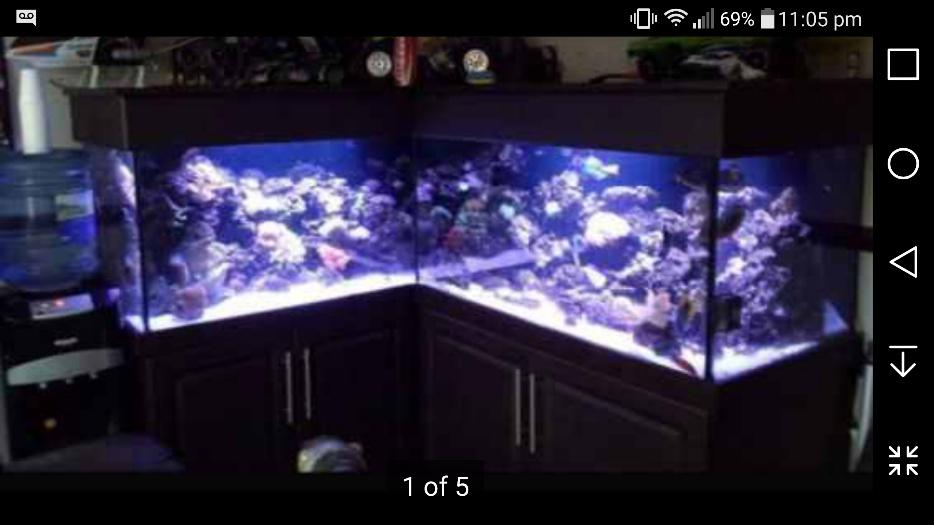 6ft X 5ft X 2ft Corner Fishtank Reptile Tank Cabinet Included Aquarium Outside Black Country
