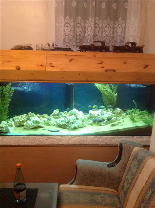 Fish tank walsall dudley for Used fish tank