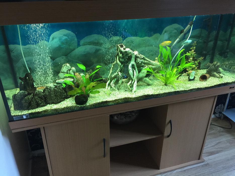 juwel rio 400 aquarium beech wood wolverhampton dudley. Black Bedroom Furniture Sets. Home Design Ideas