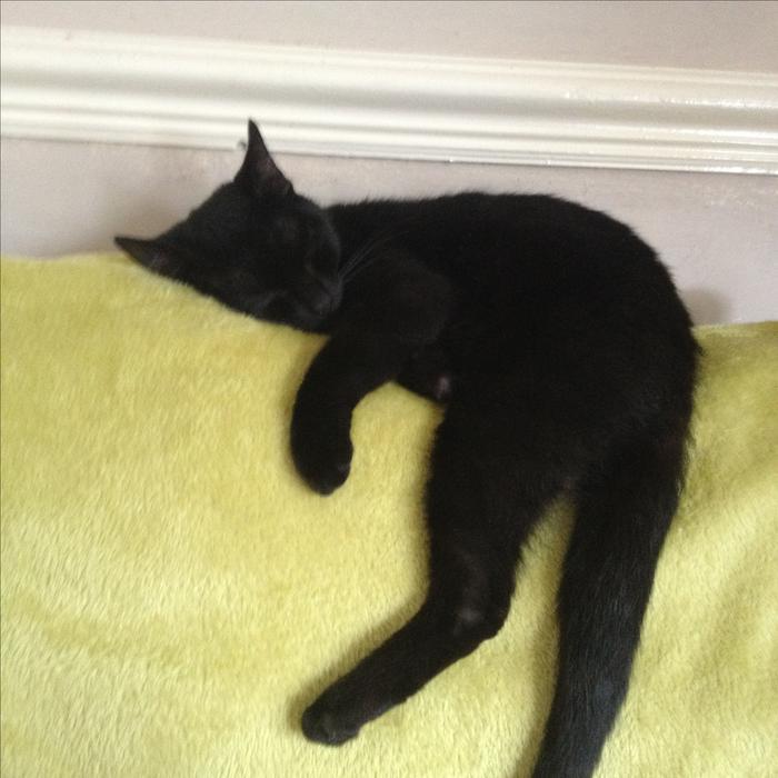 1 Year Old Female Black Cat WOLVERHAMPTON, Dudley