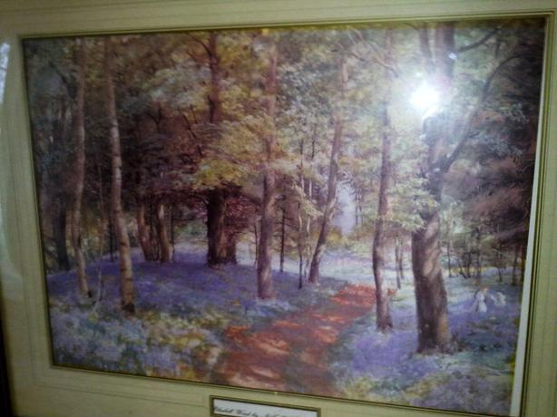Framed print bluebell wood