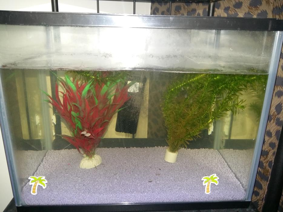 Pets At Home Starter Fish Tank 19l As New Walsall