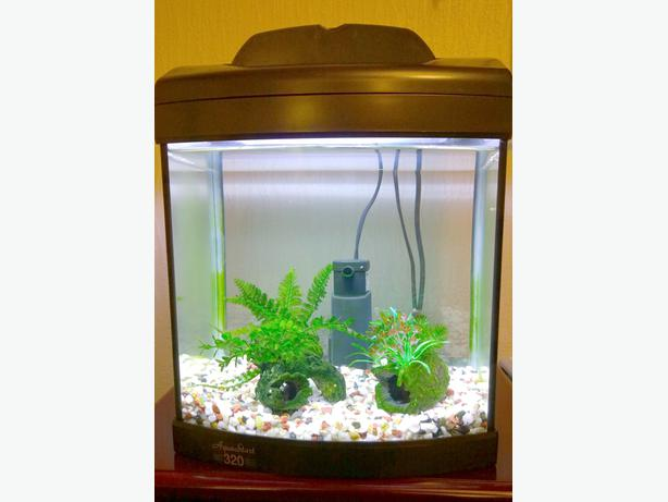 Fish Tank Complete set Up WALSALL, Wolverhampton