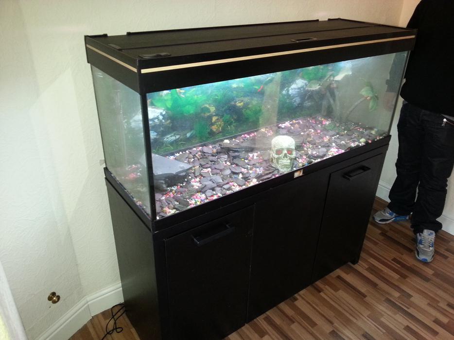 Aquamanta efx 240 4ft fish tank full setup with cabinet for Used fish tank