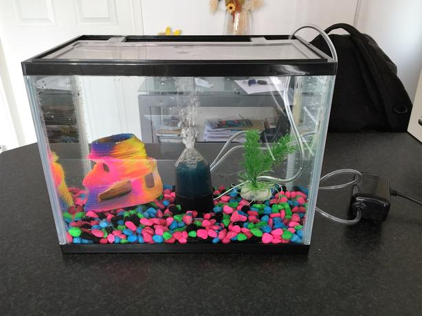 Cold Water Fish Tank Setup Stourbridge Sandwell