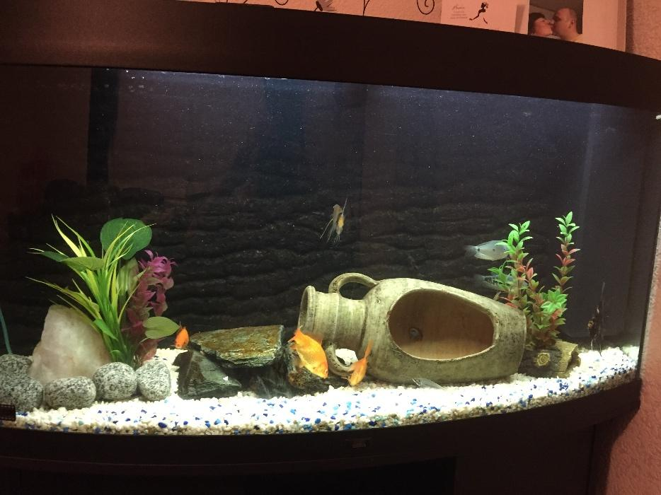 Aquriam fish tank with stand aldridge walsall - Fish tank coffee table amazon ...