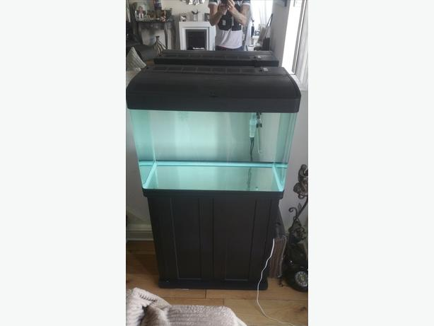 Coldwater or tropical fish tank walsall wolverhampton for Tap tap fish corgi