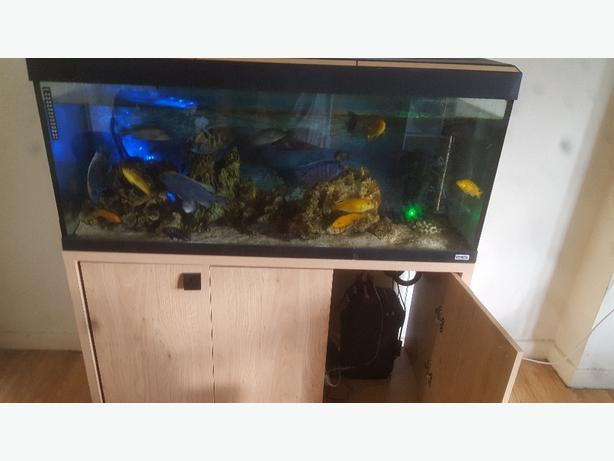 240 litre fluvial fish tank and cabinet with built in for Fish tank with built in filter