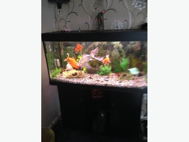 4ft fish tank with cupboard and full set up