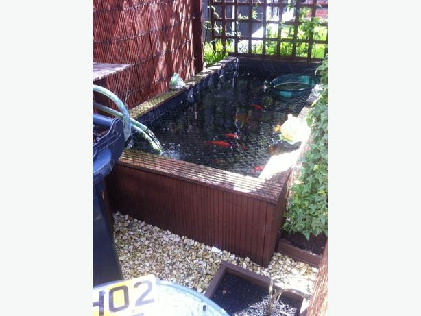Pond fish for sale koi goldfish etc dudley dudley mobile for Used pond filter for sale