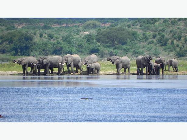 Day Tour to Queen Elizabeth National Park Wildlife Outside Black ...