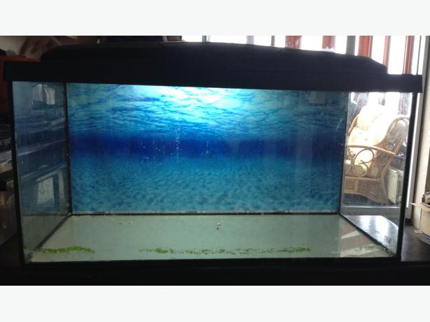 Fish tank set up coseley walsall for Fish tank with built in filter