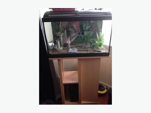 2ft fishtank and stand 50 no offers wolverhampton sandwell for Fish tank filter not working