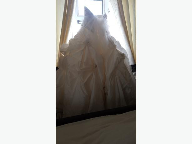 designer wedding gown / Ronald Joyce