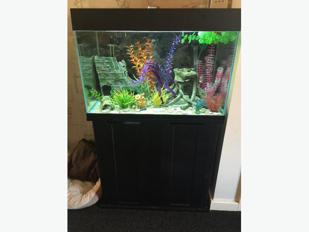Fish tank walsall wolverhampton for Tap tap fish corgi