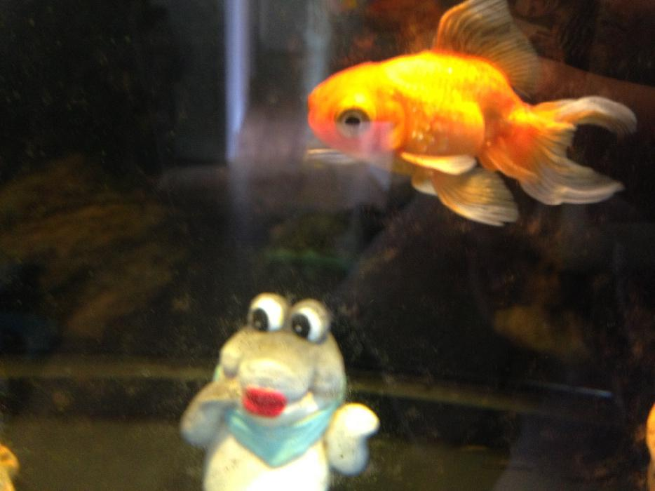 fish tank west bromwich wolverhampton