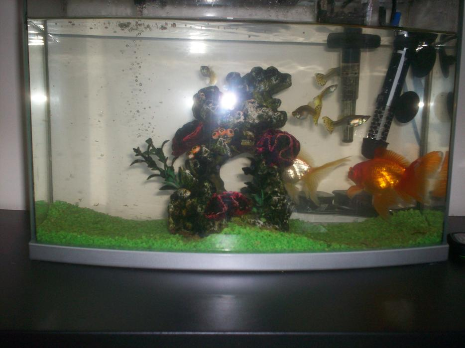 For sale aquarium with fish walsall wolverhampton for Used fish tanks for sale